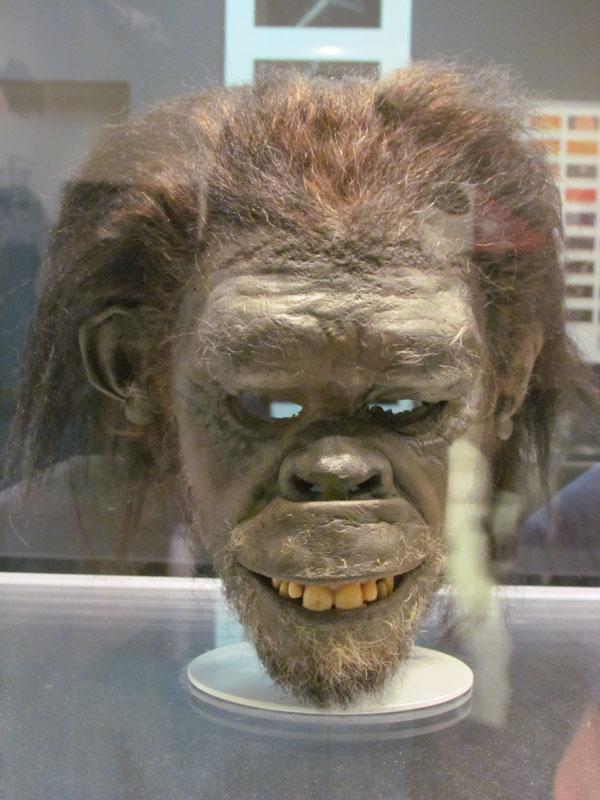 2001-ape-head